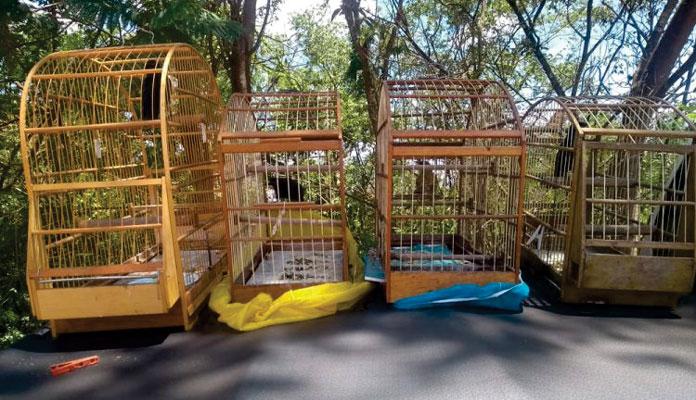 Após apreensão, aves foram postas em liberdade (Foto: rapidonoar.com.br)
