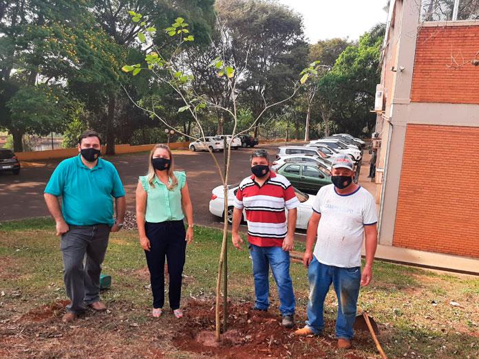 Ipê branco é plantado no paço municipal (Foto: Divulgação)